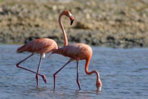 flamingi meksyk