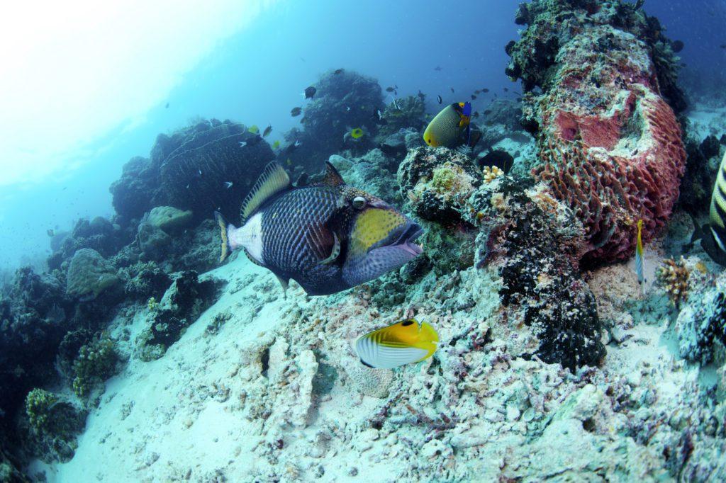 rafa koralowa borneo