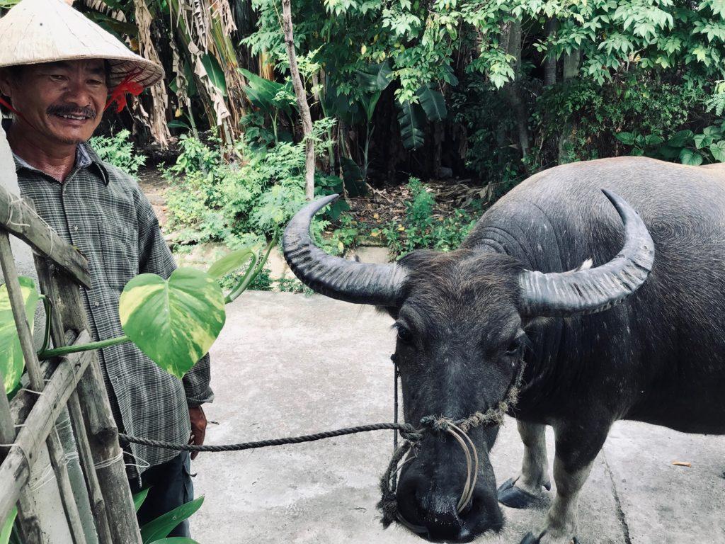 zwierzęta w wietnamie