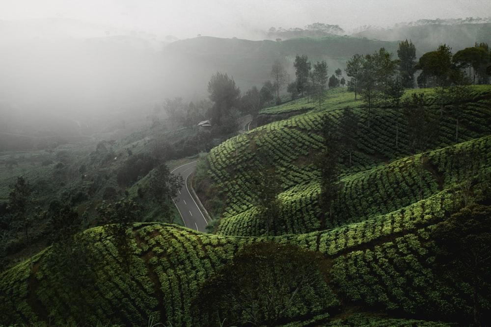 info indonezja