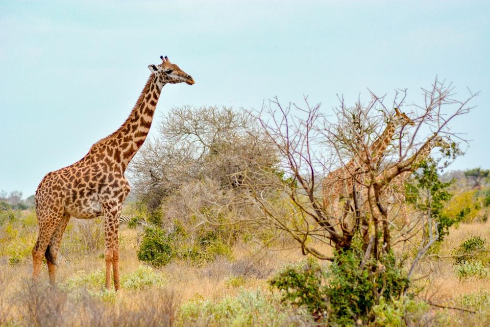 park narodowy tsavo wschodnie