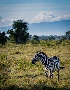 najciekawsze atrakcje kenii