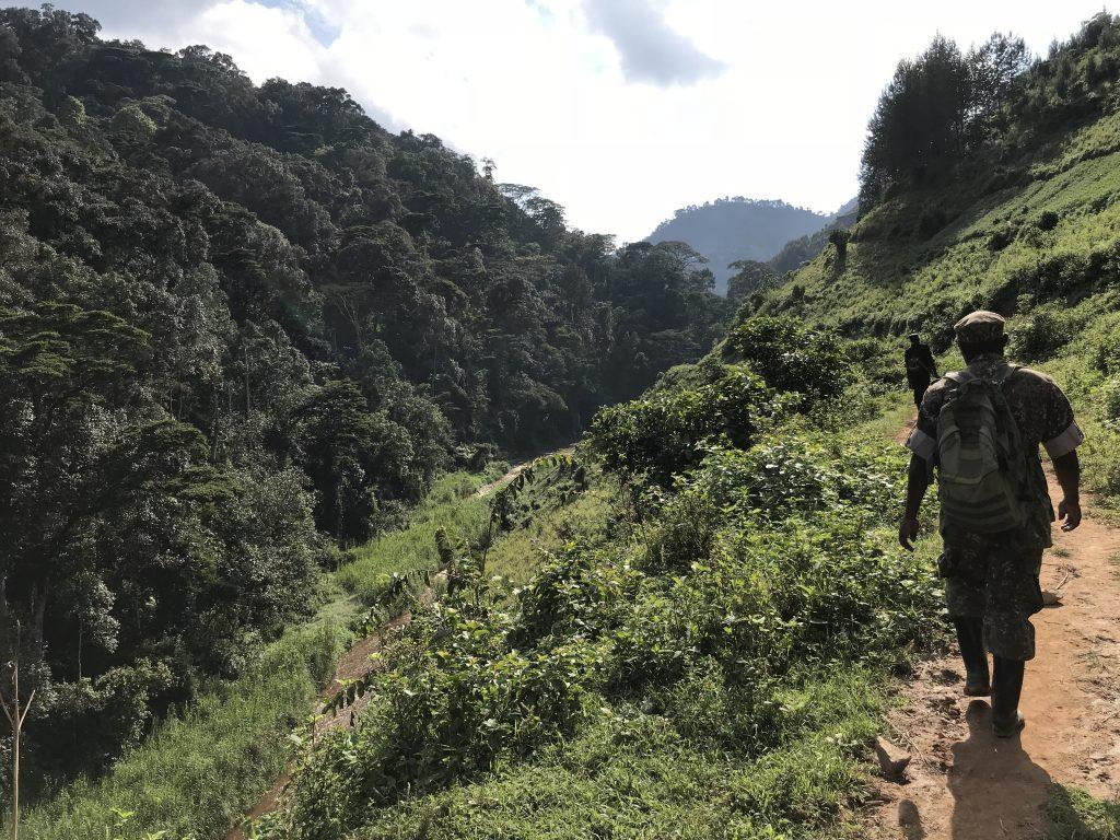 Trekking do goryli