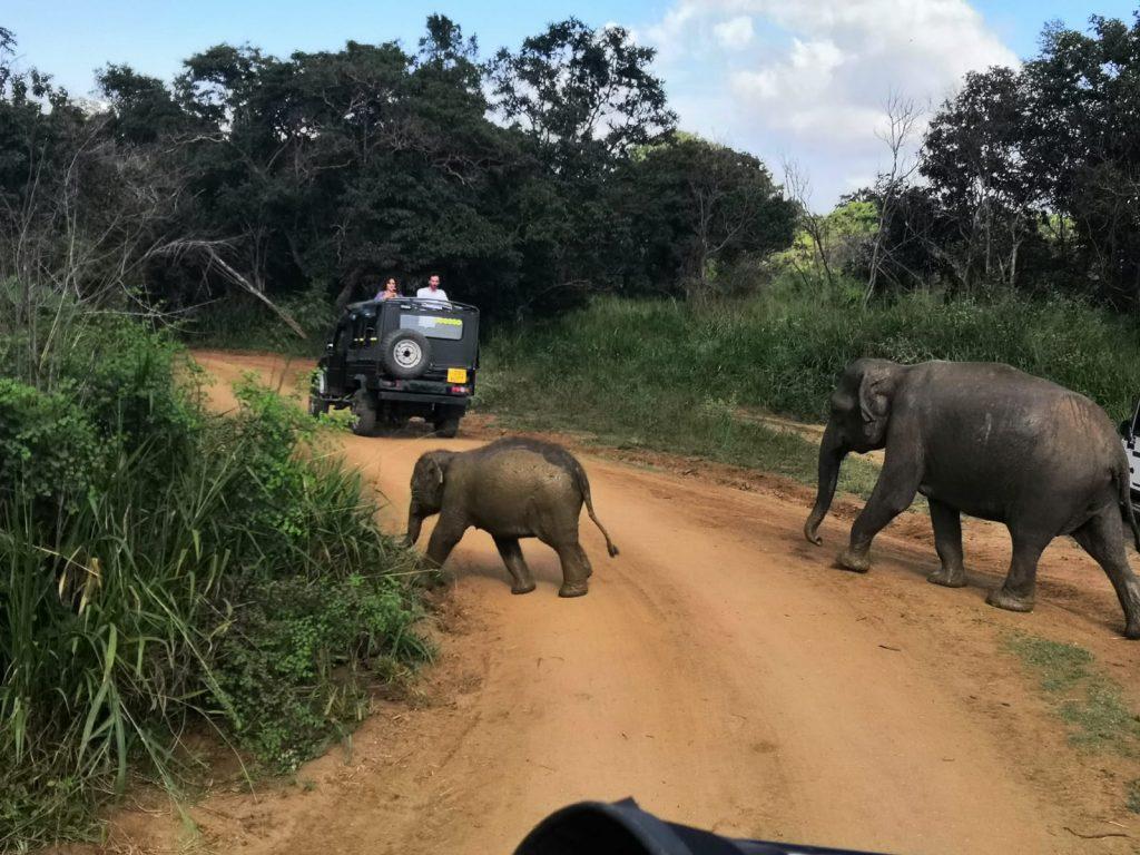 Safari na Sri Lance
