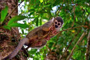 Yasuni Park Amazonia Ameryka Południowa