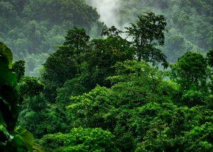 Dżungla Amazonia Ekwador Ameryka Południowa