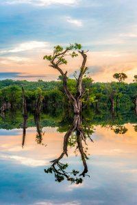 Dżungla Jezioro Amazonia Ekwador Ameryka Południowa