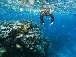 Nurkowanie Galapagos Ameryka Południowa