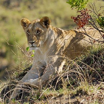 lew tanzania